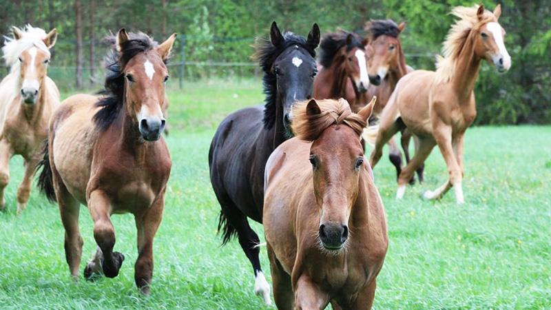 Finland, Åbo - Ridweekend på finska hästar