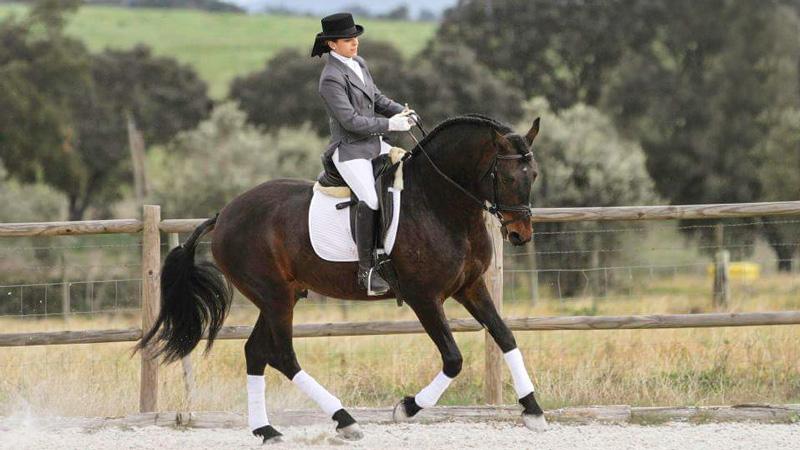 Portugal, Avis - Dressyr och Working Equitation