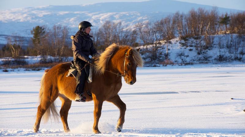 Sverige, Lappland - Vinteräventyr ()