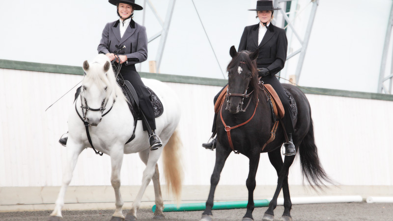 Sverige, Uppland - Ridning i harmoni med working equitation på lusitanos