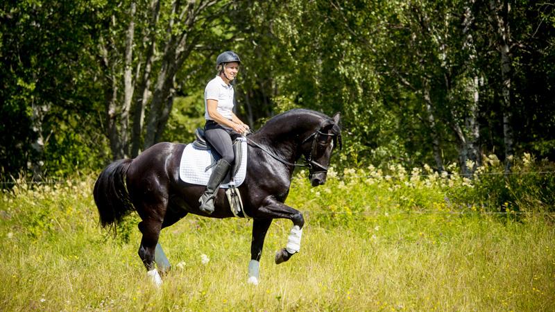 Sverige, Västerås - Dressyr och Working Equitation på lusitanos
