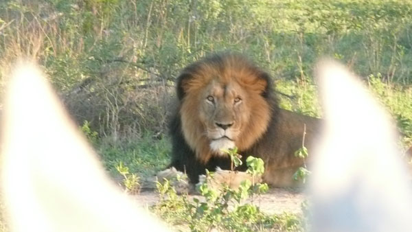 Sydafrika, Karongwe
