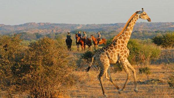Sydafrika och Botswana